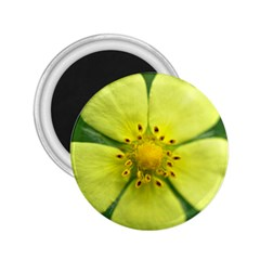 Yellowwildflowerdetail 2 25  Button Magnet by bloomingvinedesign