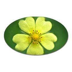 Yellowwildflowerdetail Magnet (oval) by bloomingvinedesign