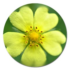 Yellowwildflowerdetail Magnet 5  (round) by bloomingvinedesign