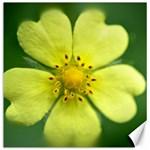 Yellowwildflowerdetail Canvas 16  x 16  (Unframed) 16 x16 Canvas - 1