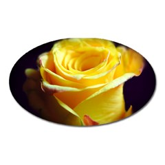 Yellow Rose Curling Magnet (oval) by bloomingvinedesign