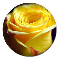 Yellow Rose Curling Magnet 5  (round) by bloomingvinedesign