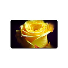 Yellow Rose Curling Magnet (name Card) by bloomingvinedesign