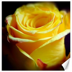 Yellow Rose Curling Canvas 16  X 16  (unframed) by bloomingvinedesign