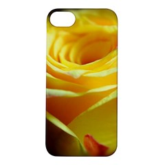 Yellow Rose Curling Apple Iphone 5s Hardshell Case by bloomingvinedesign