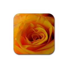 Yellow Rose Close Up Drink Coasters 4 Pack (square) by bloomingvinedesign