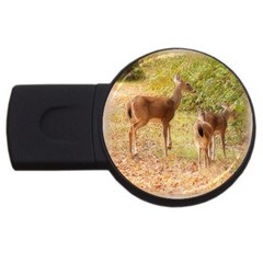 Deer In Nature 2gb Usb Flash Drive (round) by uniquedesignsbycassie