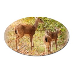 Deer In Nature Magnet (oval) by uniquedesignsbycassie