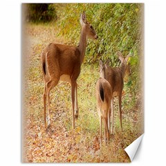 Deer In Nature Canvas 12  X 16  (unframed) by uniquedesignsbycassie