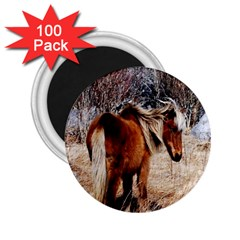 Pretty Pony 2 25  Button Magnet (100 Pack) by Rbrendes