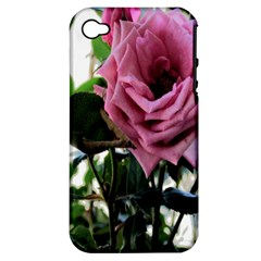 Rose Apple Iphone 4/4s Hardshell Case (pc+silicone) by Rbrendes