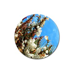 Australia Flowers Magnet 3  (round) by Rbrendes