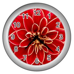 Red Dahila Wall Clock (silver) by Colorfulart23
