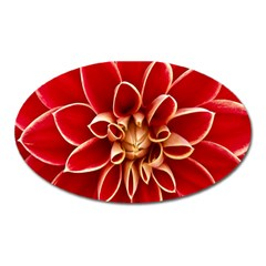 Red Dahila Magnet (oval) by Colorfulart23