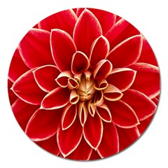 Red Dahila Magnet 5  (round) by Colorfulart23