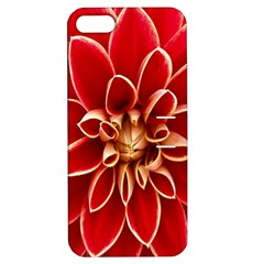 Red Dahila Apple Iphone 5 Hardshell Case With Stand by Colorfulart23