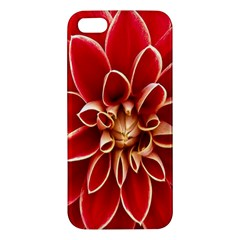 Red Dahila Apple Iphone 5 Premium Hardshell Case by Colorfulart23