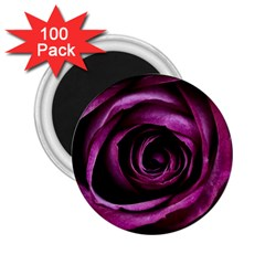 Deep Purple Rose 2 25  Button Magnet (100 Pack) by Colorfulart23