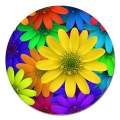 Gerbera Daisies Magnet 5  (round) by StuffOrSomething
