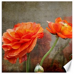 Orange Rose From Bud To Bloom Canvas 12  X 12  (unframed)