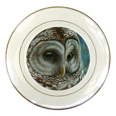 Barred Owl Porcelain Display Plate by TonyaButcher