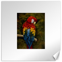 Preening Canvas 12  X 12  (unframed) by TonyaButcher