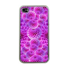 Purple Dahlias Apple Iphone 4 Case (clear) by FunWithFibro