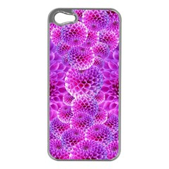 Purple Dahlias Apple Iphone 5 Case (silver) by FunWithFibro