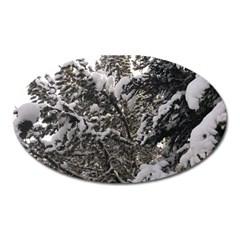 Snowy Trees Magnet (oval) by DmitrysTravels