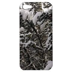 Snowy Trees Apple Iphone 5 Hardshell Case by DmitrysTravels