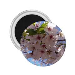 Sakura 2 25  Button Magnet by DmitrysTravels