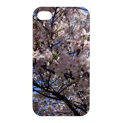 Sakura Tree Apple Iphone 4/4s Premium Hardshell Case by DmitrysTravels