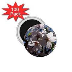 Cherry Blossoms 1 75  Button Magnet (100 Pack) by DmitrysTravels