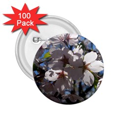 Cherry Blossoms 2 25  Button (100 Pack) by DmitrysTravels