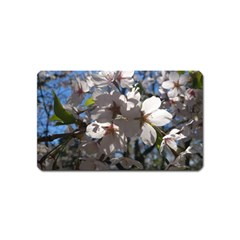Cherry Blossoms Magnet (name Card) by DmitrysTravels