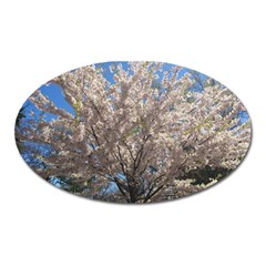 Cherry Blossoms Tree Magnet (oval) by DmitrysTravels
