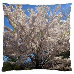 Cherry Blossoms Tree Large Cushion Case (single Sided)  by DmitrysTravels