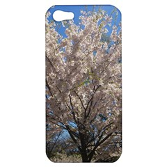 Cherry Blossoms Tree Apple Iphone 5 Hardshell Case by DmitrysTravels