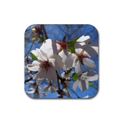 Cherry Blossoms Drink Coasters 4 Pack (square) by DmitrysTravels