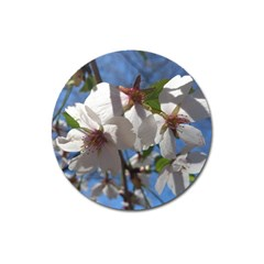 Cherry Blossoms Magnet 3  (round) by DmitrysTravels