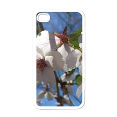 Cherry Blossoms Apple Iphone 4 Case (white) by DmitrysTravels