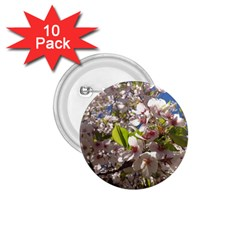 Cherry Blossoms 1 75  Button (10 Pack)