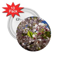 Cherry Blossoms 2 25  Button (10 Pack) by DmitrysTravels