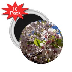 Cherry Blossoms 2 25  Button Magnet (10 Pack)