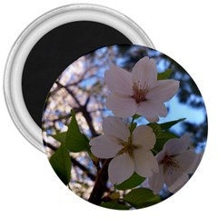 Sakura 3  Button Magnet by DmitrysTravels