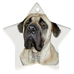 English Mastiff Ornament (Star)