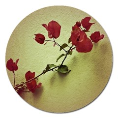 Santa Rita Flower In Warm Colors Wall Photo Magnet 5  (round) by dflcprints