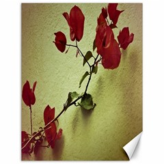 Santa Rita Flower Canvas 12  X 16  (unframed) by dflcprints