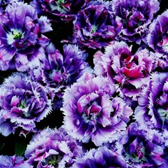 Purple Wildflowers Of Hope Canvas 12  X 12  (unframed) by FunWithFibro