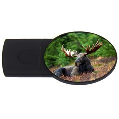 Majestic Moose 2gb Usb Flash Drive (oval) by StuffOrSomething